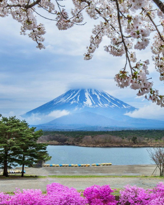 Spring in Japan - Obrázkek zdarma pro Nokia C5-06