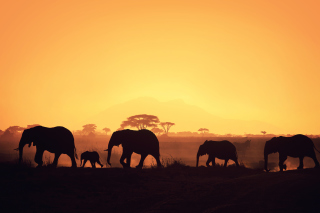 African Silhouettes Background for Android, iPhone and iPad