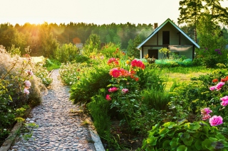 Free Country house with flowers Picture for Android, iPhone and iPad