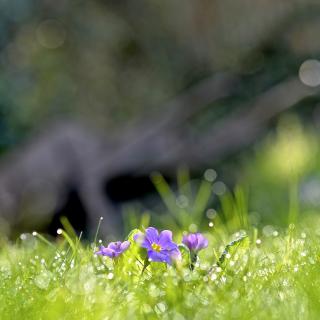 Grass and lilac flower - Obrázkek zdarma pro iPad 2