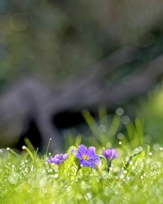 Grass and lilac flower - Obrázkek zdarma pro iPhone 6 Plus