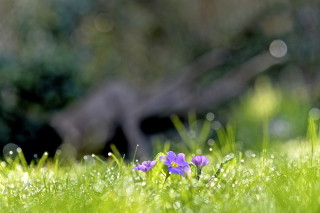 Grass and lilac flower Background for Android, iPhone and iPad