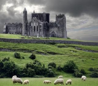 Ireland Landscape With Sheep And Castle - Obrázkek zdarma pro 208x208