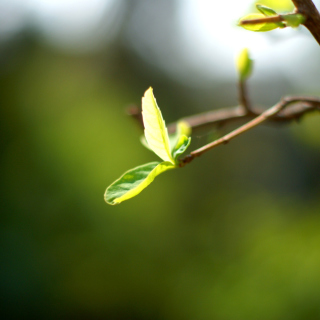 Macro Leaf - Obrázkek zdarma pro iPad 2