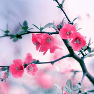 Pink Spring Flowers - Obrázkek zdarma pro iPad Air