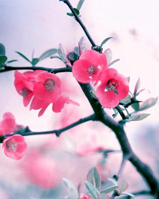 Pink Spring Flowers - Obrázkek zdarma pro Nokia Asha 308