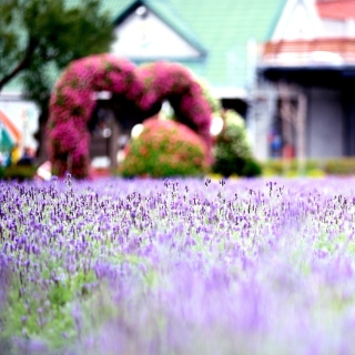 Purple Macro Flowers - Obrázkek zdarma pro 1024x1024