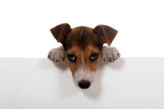 Sad Little Puppy Picture for Android, iPhone and iPad