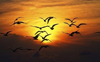 Картинка Sunset Birds для Android
