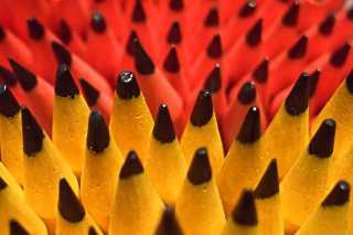 Colored Pencil Set Background for Android, iPhone and iPad