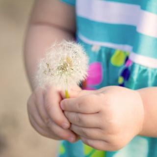 Little Girl's Hands Holding Dandelion - Obrázkek zdarma pro iPad