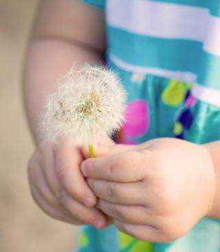 Little Girl's Hands Holding Dandelion - Obrázkek zdarma pro iPhone 6 Plus