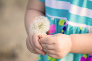 Free Little Girl's Hands Holding Dandelion Picture for Android, iPhone and iPad
