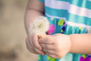 Little Girl's Hands Holding Dandelion - Obrázkek zdarma pro Samsung B7510 Galaxy Pro