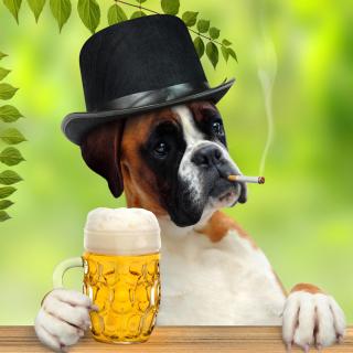 Dog drinking beer - Obrázkek zdarma pro iPad Air