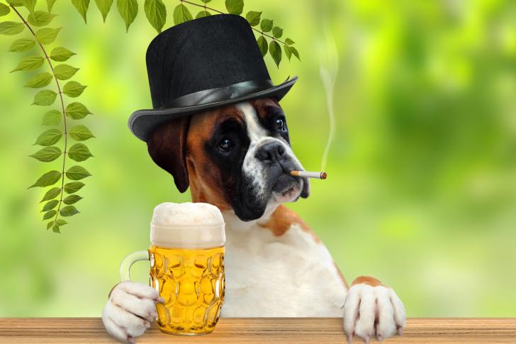 Dog drinking beer wallpaper