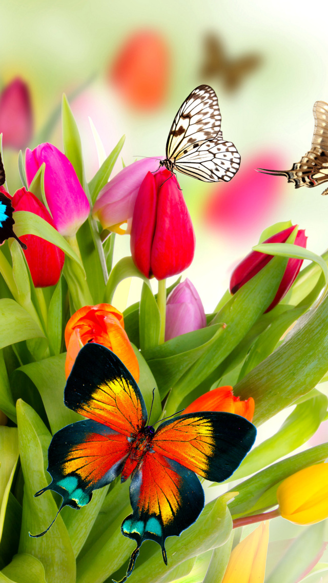 Tulips And Butterflies Wallpaper For Iphone 5