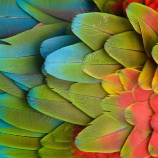 Parrot Pattern - Obrázkek zdarma pro 1024x1024