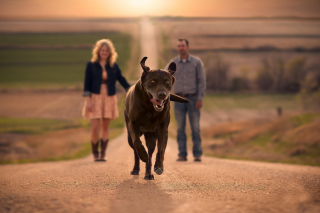 Free Happy Dog Run Picture for Android, iPhone and iPad