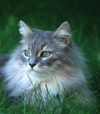 Fluffy Cat - Obrázkek zdarma pro Nokia Asha 501