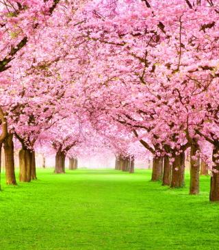 Sakura Park - Obrázkek zdarma pro Nokia C5-03