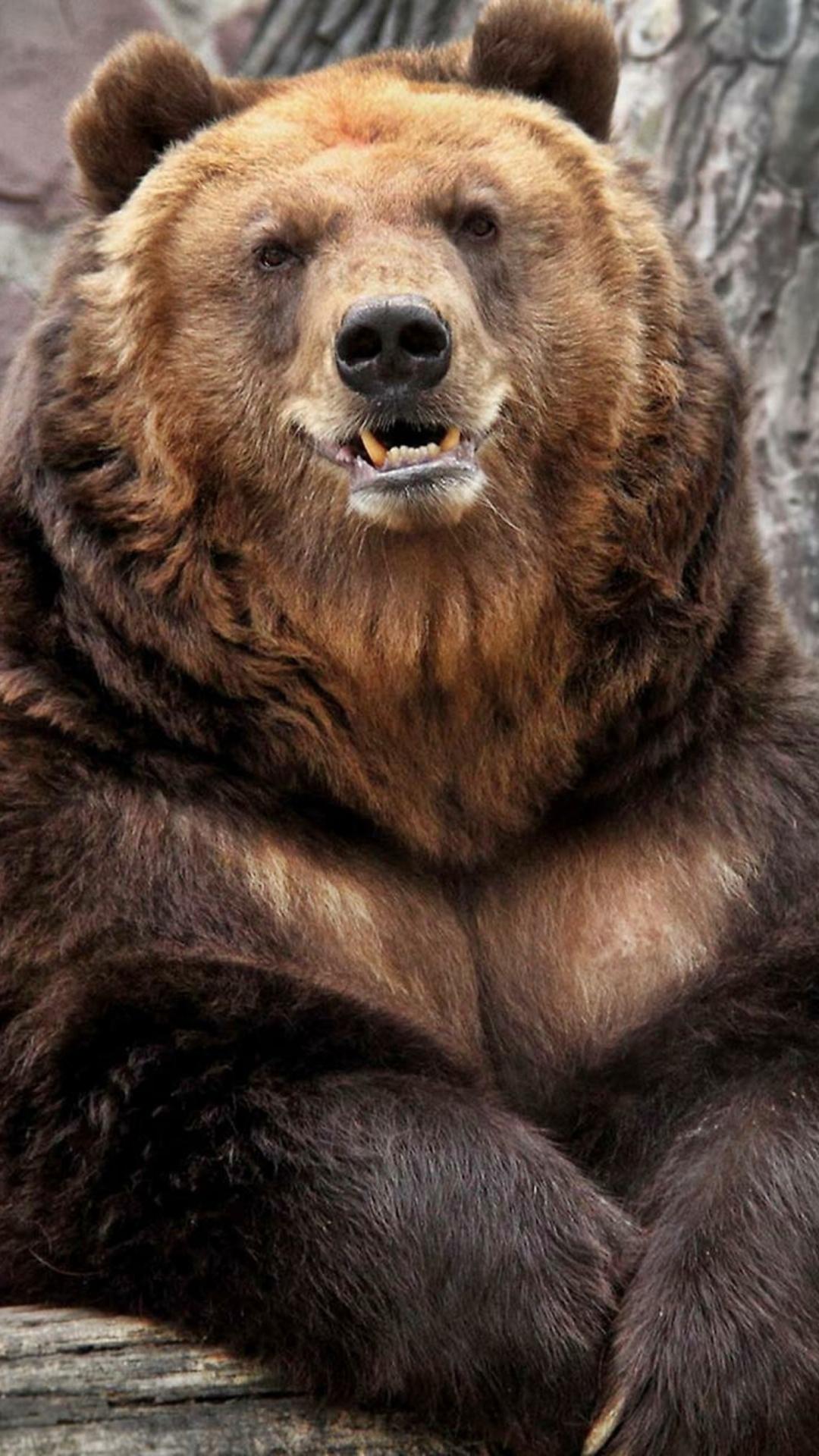 Older Hairychest Musclebear Daddies Beefy Bearish Husky