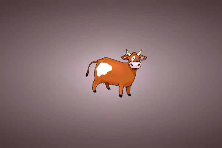 Cow Wallpapers for Desktop  WallpaperSafari
