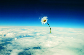 Macro Daisy in SKy Background for Android, iPhone and iPad