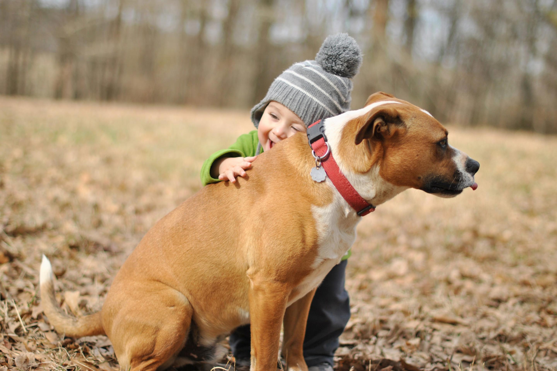 природа животные собака девочка жизнь nature animals dog girl life  № 3951038 бесплатно