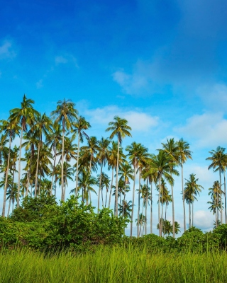 Malaysia, Bohey Dulang Island - Obrázkek zdarma pro Nokia C2-06