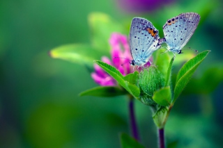 Blue Butterflies On Green Leaves Wallpaper for Android, iPhone and iPad