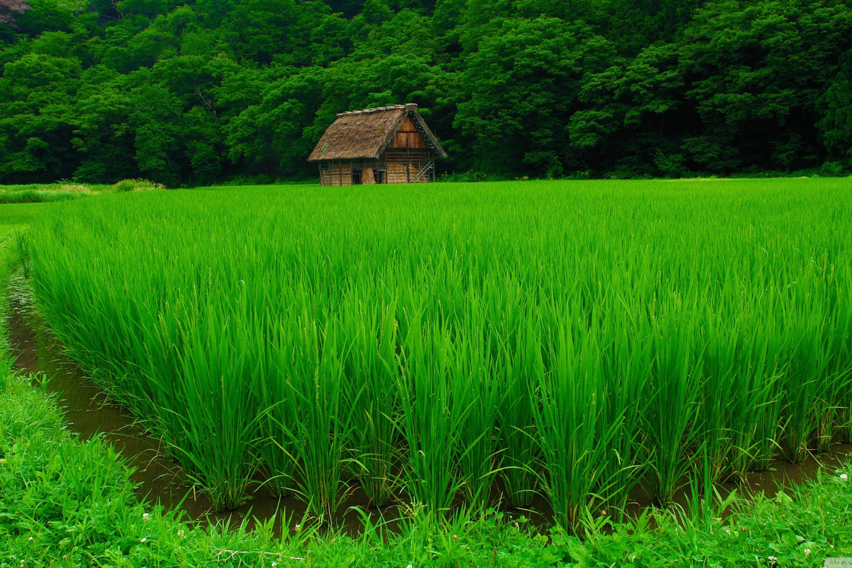 природа поле трава зеленая  № 610565  скачать