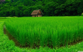 House In Fields Of Green Picture for Android, iPhone and iPad
