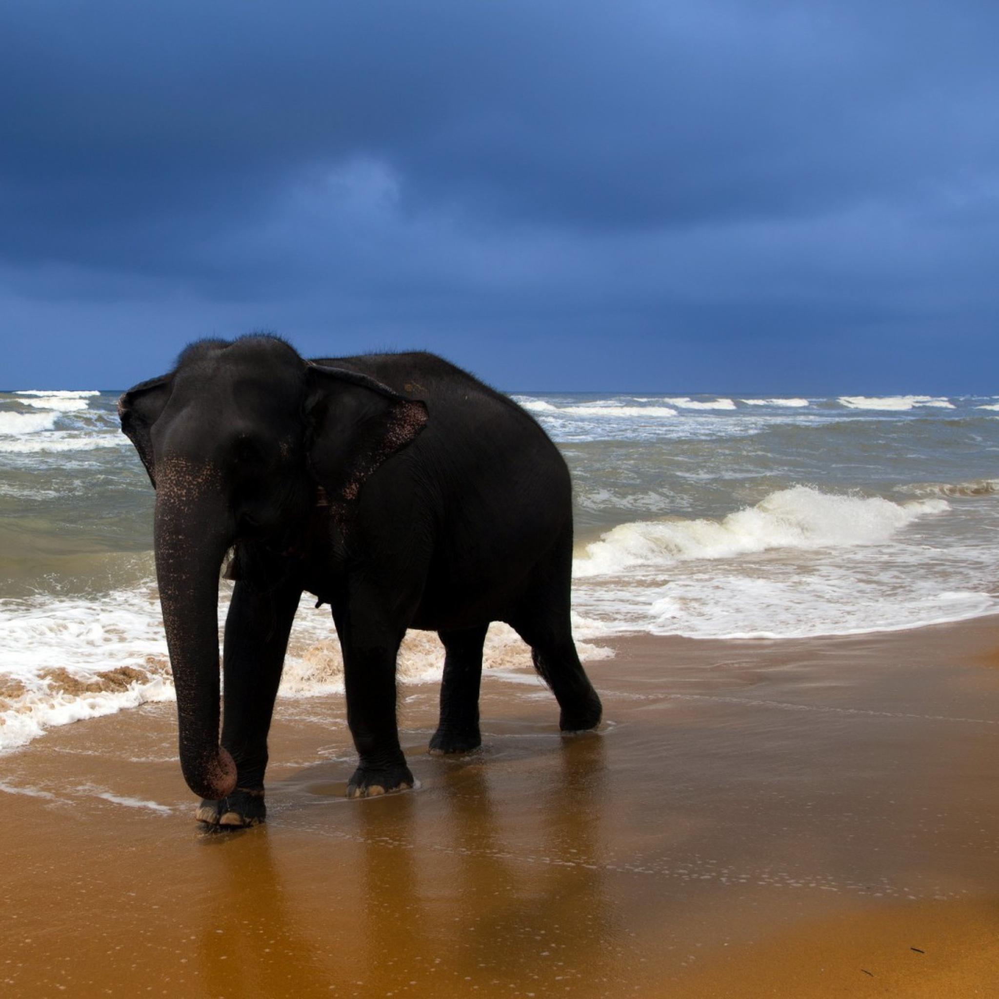 собака песок вода животное природа  № 956949  скачать