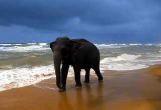 Elephant On Beach Background for Android, iPhone and iPad