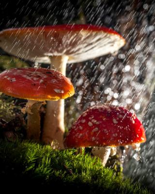 Amanita under rain - Obrázkek zdarma pro 320x480