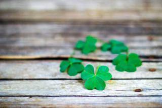 Free Macro clover leaves Picture for Android, iPhone and iPad