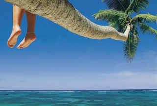 Sitting On Palm Tree Above Ocean Picture for Android, iPhone and iPad