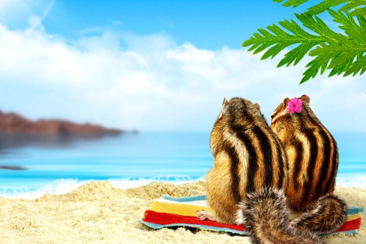 Chipmunks on beach wallpaper