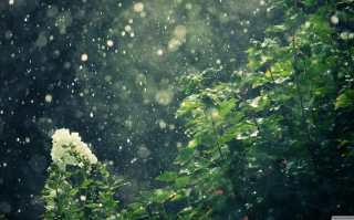 Free Summer Rain Picture for Android, iPhone and iPad