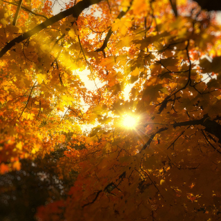 Autumn Sunlight and Trees - Obrázkek zdarma pro 128x128
