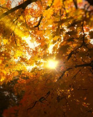 Autumn Sunlight and Trees - Obrázkek zdarma pro Nokia Asha 308