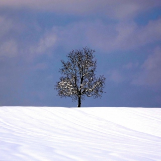 Tree And Snow - Obrázkek zdarma pro 128x128