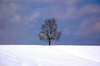 Tree And Snow - Obrázkek zdarma pro Fullscreen Desktop 1400x1050