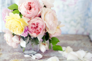 Tender Peonies Picture for Android, iPhone and iPad