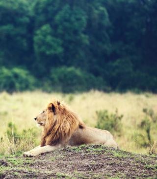 Wild Lion - Obrázkek zdarma pro Nokia X2-02
