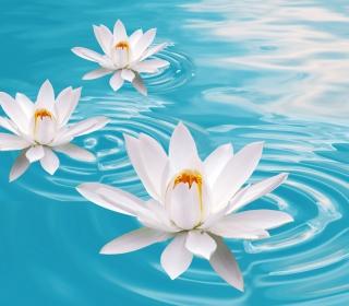 White Lilies And Blue Water - Obrázkek zdarma pro iPad mini 2
