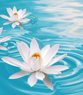 White Lilies And Blue Water - Obrázkek zdarma pro Nokia X7
