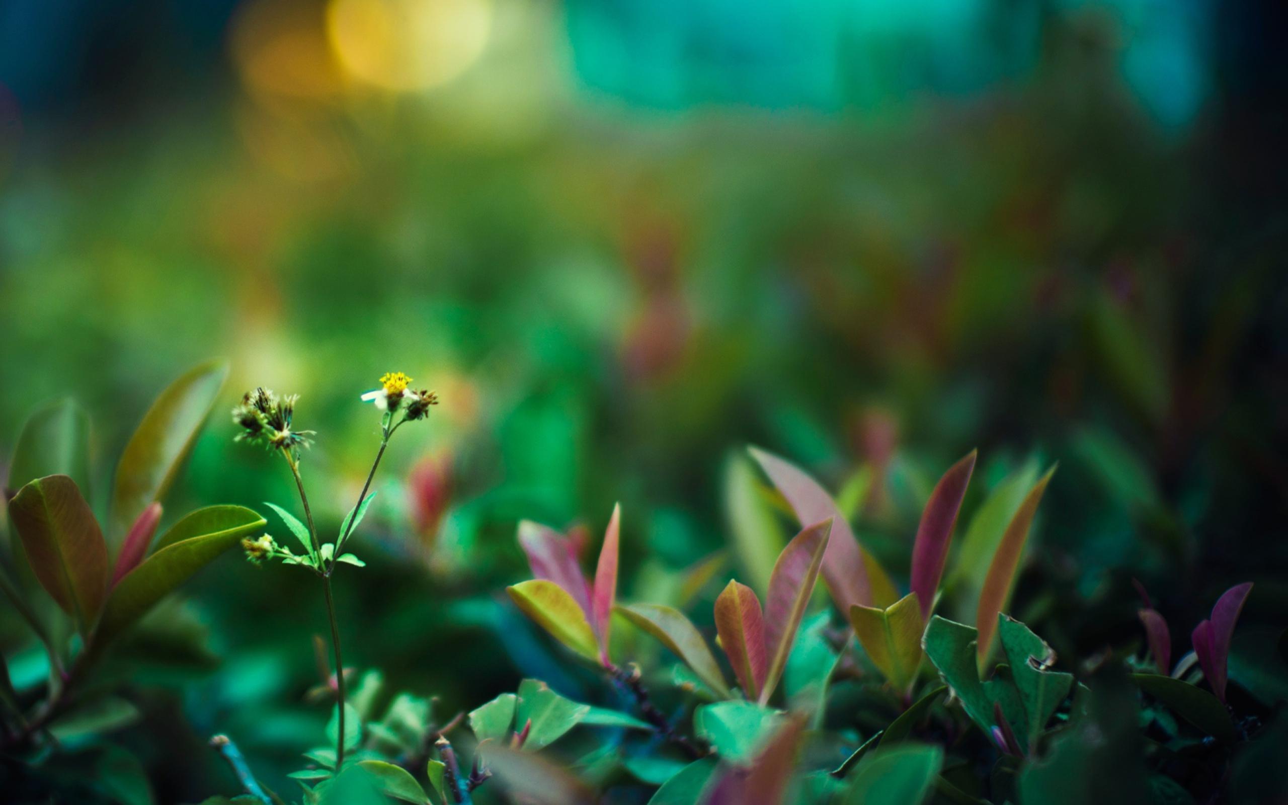 природа цветы листья  № 2053535 без смс