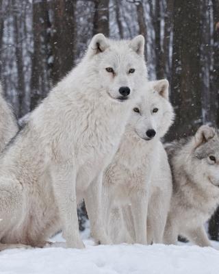 Wolf Pack Howls - Obrázkek zdarma pro Nokia 5800 XpressMusic